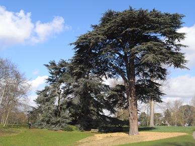 """诗篇九十二篇12节:  """"义人要发旺如棕树, 生长如黎巴嫩的香柏树"""""""